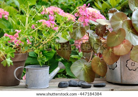 flowers pots, watering cans on wooden table in front of flower in garden  - stock photo