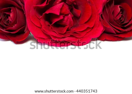 flowers red roses on a white background