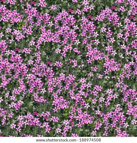 flowers seamless background - stock photo