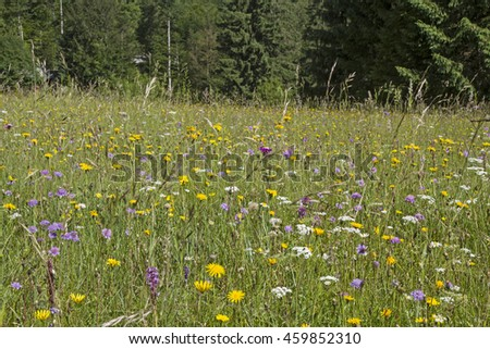 Flowers splendor on a summer meadow in the Ammergau Alps - stock photo