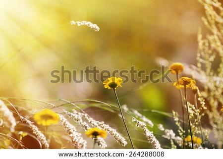Flowers, spring - stock photo