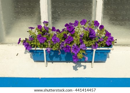 Flowers standing on the windowsill.Beautiful petunias adorn the streets of the city.