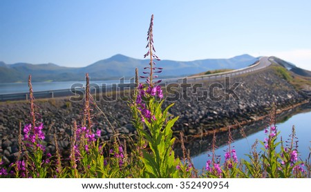 Flowers symbolize beauty of short northern summer against the severe nature and leaving afar are expensive - stock photo