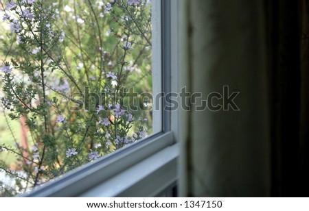 Flowers through the window - stock photo