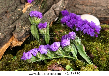 Flowers, tree bark and moss in forest close up