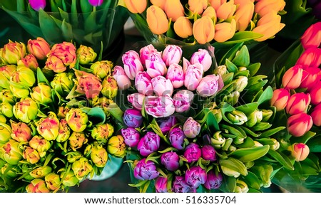 Flowers tulips. Colored bouquets of tulips. Tulips for Women's Day and Mother's Day. Also for brides bouquets for weddings. Happy new year, or Valentine's day. 8 march