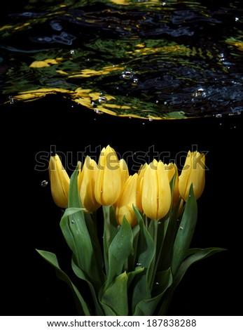Flowers underwater - stock photo