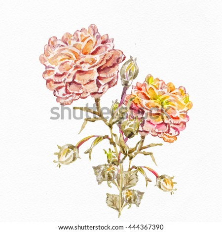 Flowers watercolor illustration. Manual composition. Mother's Day, wedding, birthday, Easter, Valentine's Day. Pastel colors. Spring. Summer