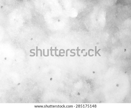 Flowers white, cotton fiber, cotton, meat tender. - stock photo