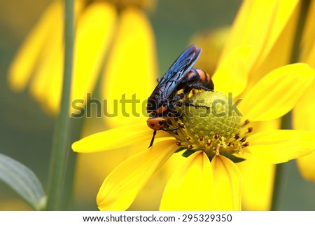 Flowers with the wasp/Yellow flowers attract wasps