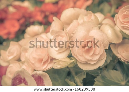 Flowers with vintage style. - stock photo