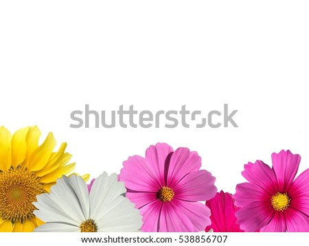 Flowers with white background.