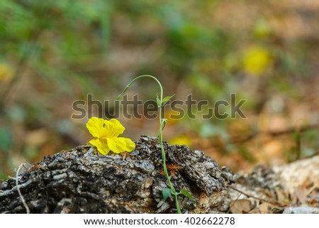 Yellow Tree Logo Name