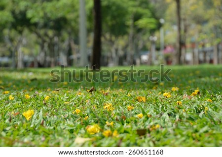 flowers yellow wall background sky green landscape lawn summer grass nature outdoors beauty tree land pasture  - stock photo