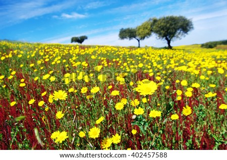 flowery field on spring at Portugal - stock photo