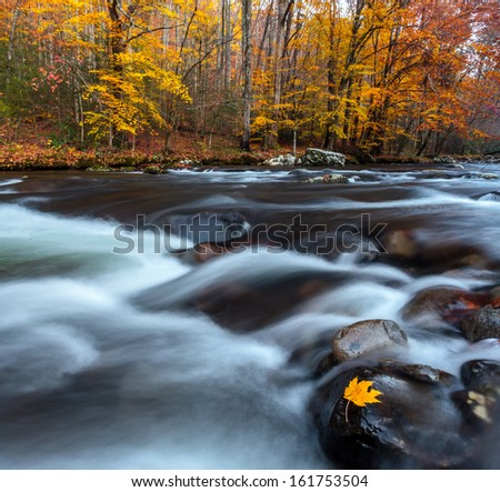 Flowing creek, stream in the smoky mountains with autumn leaf in the foreground and distant colorful trees, with fall colors in the background  - stock photo