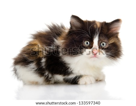 fluffy  beautiful kitten. looking at camera. isolated on white background - stock photo