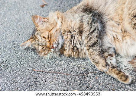 Fluffy beautiful red cat lying on the asphalt . Soft focus.