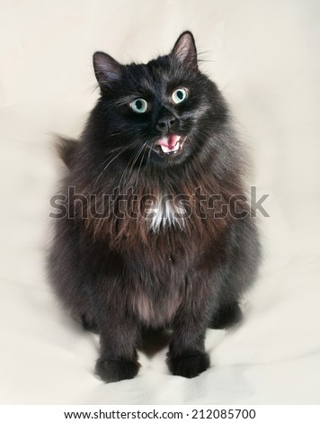 Fluffy black cat sitting on yellow background with his tongue hanging out