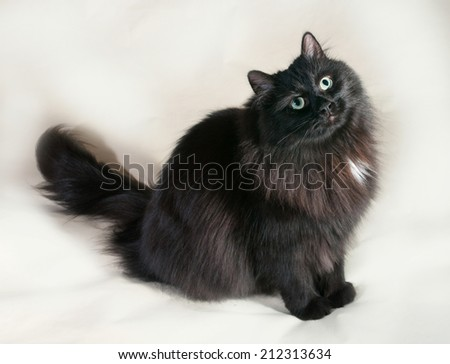 Fluffy black cat with green eyes sitting on gray background