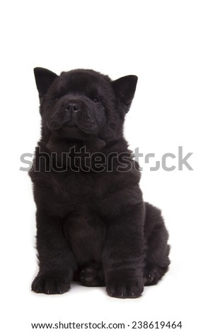 fluffy black chow-chow puppy isolated over white background - stock photo