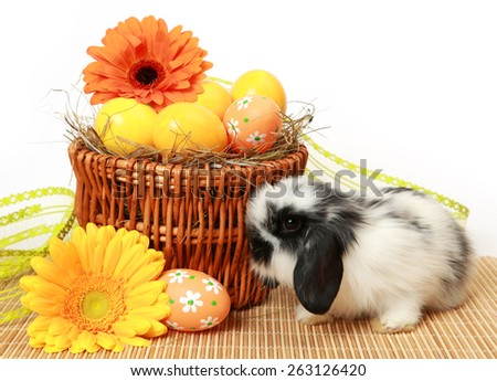 fluffy Bunny and colored eggs - stock photo