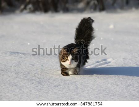 Fluffy cat in a winter park on sparkling snow. - stock photo