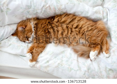 fluffy cat in bed - stock photo