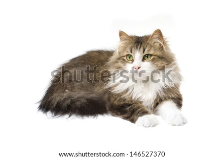 fluffy cat lying on a white background - stock photo