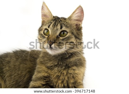 fluffy cat on a white background