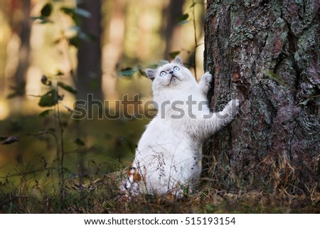 fluffy cat posing outdoors