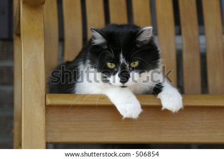 fluffy cat resting on a rocking chair