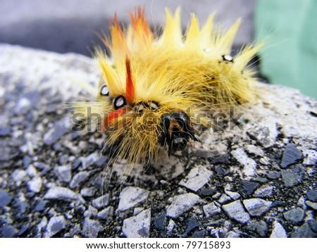 Fluffy caterpillar - stock photo
