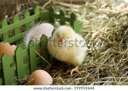 Fluffy chicken sitting on hay near green box - stock photo