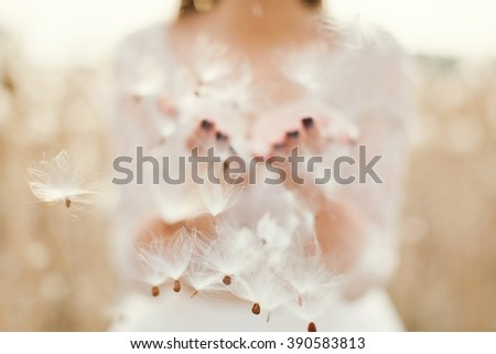 fluffy dandelion seeds in the hands