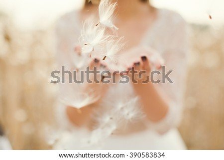 fluffy dandelion seeds in the hands - stock photo