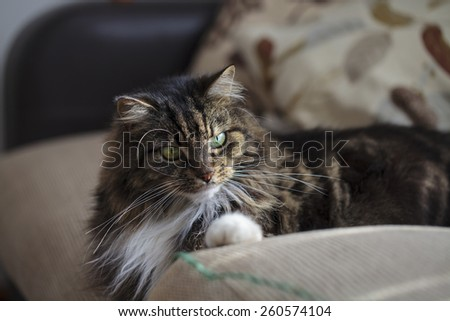 Fluffy domestic cat on the sofa - stock photo