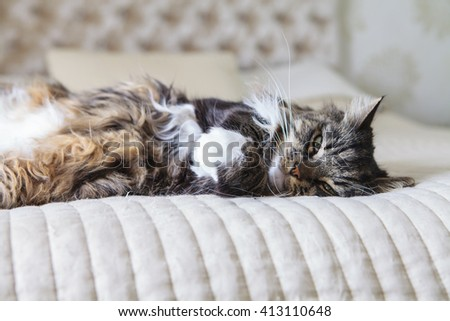 Fluffy domestic cat sleeping on the bed - stock photo