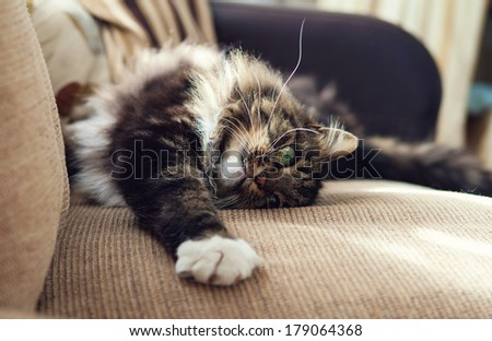 Fluffy domestic cat stretching on the sofa - stock photo