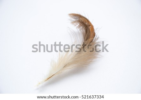 fluffy feather bird smooth and soft on white