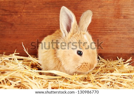 Fluffy foxy rabbit in a haystack on wooden background - stock photo