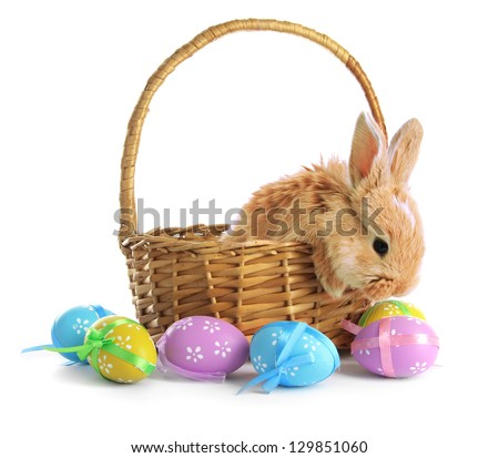 Fluffy foxy rabbit in basket with Easter eggs isolated on white - stock photo