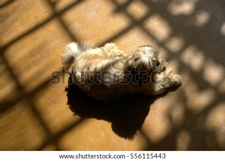 Top Fluffy Brown Adorable Dog - stock-photo-fluffy-furry-hairy-cute-adorable-dog-brown-and-white-laying-resting-sleeping-on-wooden-floor-with-556115443  Graphic_795100  .jpg