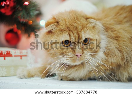 Fluffy ginger cat in a New Year's interior. Christmas atmosphere