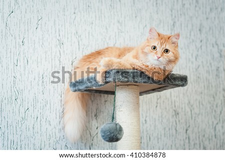 fluffy ginger cat lying on gray playhouse - stock photo