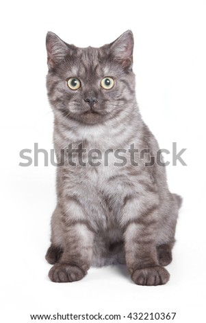 Fluffy gray cat (isolated on white)