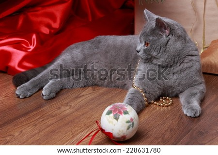 Fluffy gray cat playing with the Christmas tree decorations on holiday theme/Image of british cat with yellow eyes