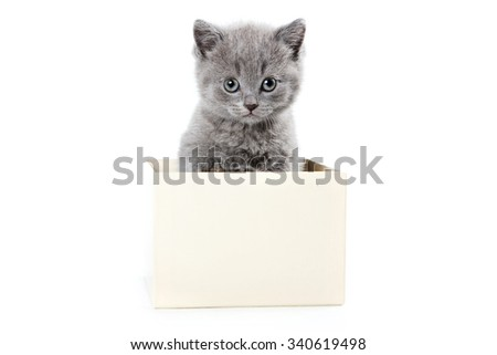 Fluffy gray kitten sits in a box (isolated on white) - stock photo