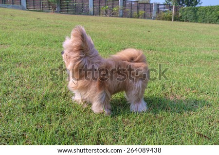 fluffy mixed breed dog get windy in the garden - stock photo