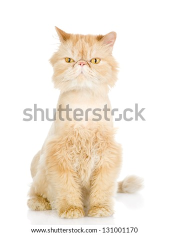fluffy orange beautiful kitten. isolated on white background - stock photo